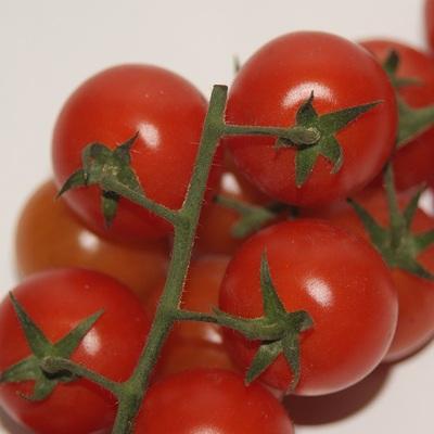 Cherry strauch tomaten